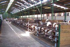 6-Odchovna-mladeho-dobytka-Straz
